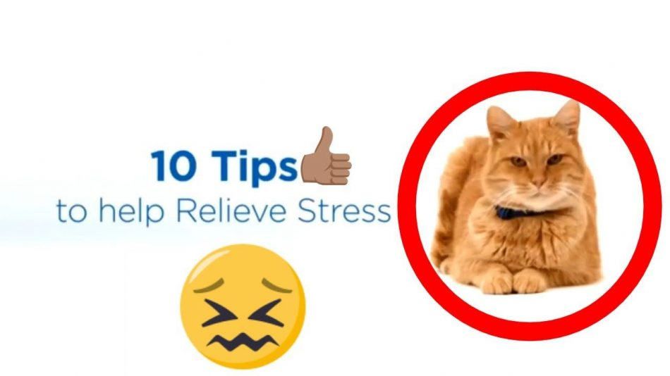 DOES YOUR CAT SHOW STRESS SIGNS? || 10 TIPS TO HELP CALM YOUR CAT️