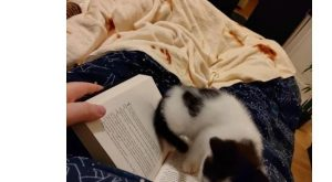 Cat – ago S 2 Posted by u/thatadamdude 16 hours Is this Day 1…
