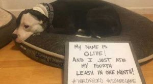21 Outrageous Dog Shame Pictures! | Barking Laughs Truly Shameful