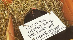 Chicken Shaming Is All You Need To Make You Laugh Today (45 Pics) -…