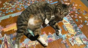 Cats And Puzzles: A Complicated Relationship – I Can Has Cheezburger?