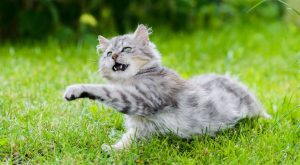Most cat parents know that it can be difficult to keep your cat moving…
