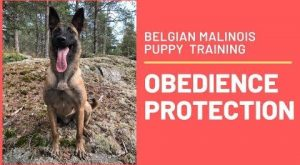 How to train a puppy obedience without force with Emma Willblad !!! – YouTube