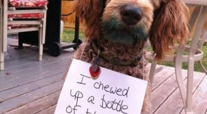 """I chewed up a bottle of blue food coloring."" ~ Dog Shaming shame -…"