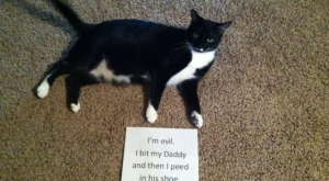 Pet Shaming At Its Finest (38 Pet Shames) – I Can Has Cheezburger?