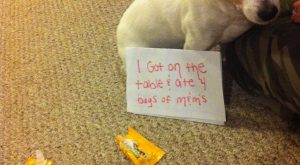 """I got on the table and ate 4 bags of peanut M&M's."" ~ Dog…"