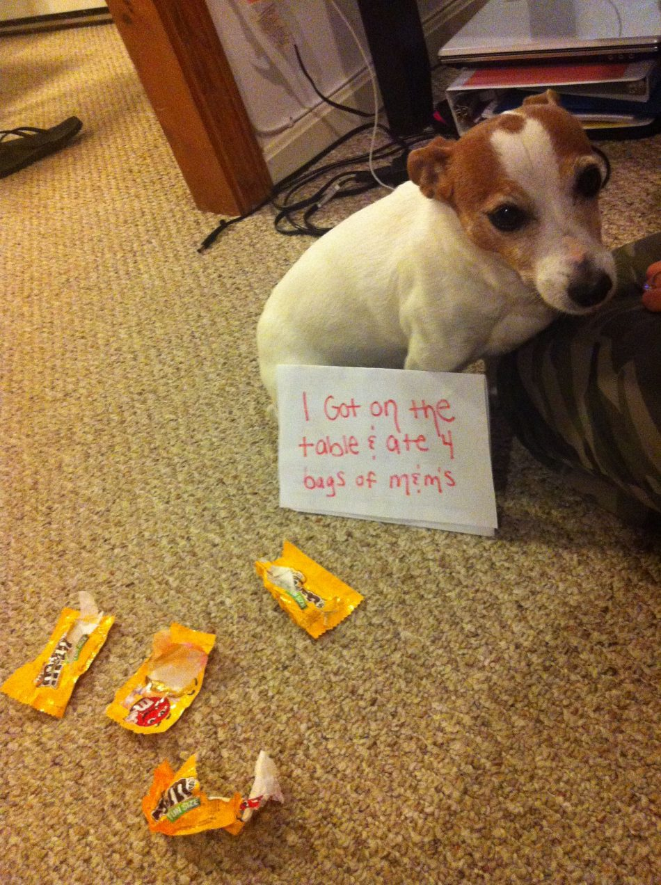 """""""I got on the table and ate 4 bags of peanut M&M's."""" ~ Dog…"""