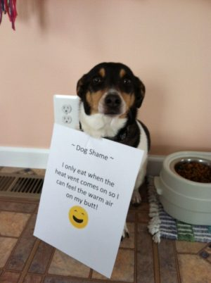 Dog Shame | I only eat when the heat vent comes on so I…