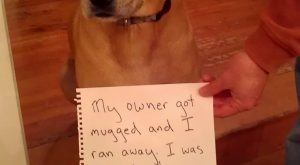 This really My owner got mugged and I ran away, I was fine