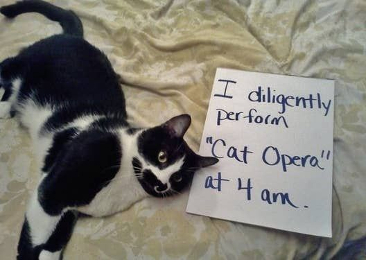20 Cats Who Got Called The Fuck Out