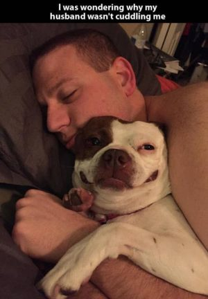 27 Dogs Having The Time Of Their Lives