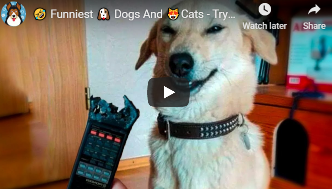 Try not to laugh animals – dogs and cats – Pet Animals Life