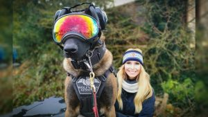 THE BELGIAN MALINOIS – SUPER SOLDIER DOG