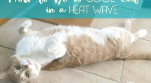 How to keep your cat cool in a heat wave. Cats seem to know…