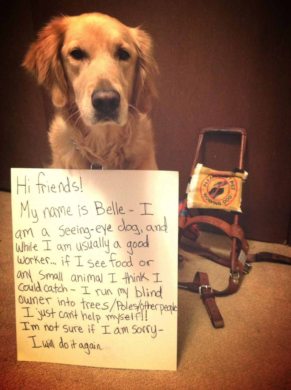 Hi friends! My name is Belle – I am a seeing-eye dog, and while…