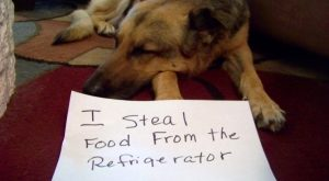 LOL Dog shaming!