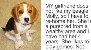 "His Girlfriend Demands ""Either The Dog Goes Or I Go"" His Response Has The…"