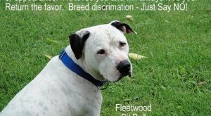 Please think of Fleet the next time you see a pit bull