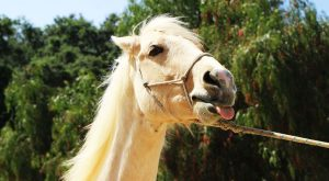 These silly horses are nothing but trouble! If you're not familiar with horse shaming,…