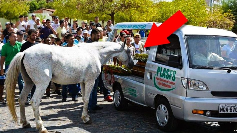 The horse came to the funeral of his master to say goodbye to him…