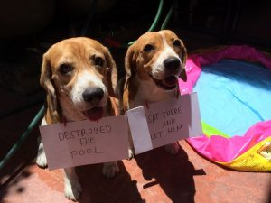 """""""Destroyed the pool."""" """"Sat there and let him!"""" Chase chewed their three-day old cooling…"""