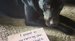 """I pooped on my moms leg when a little girl tried to pet me…"