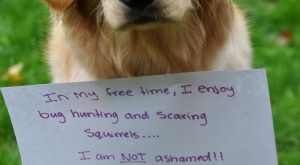 Page 3Dogshaming